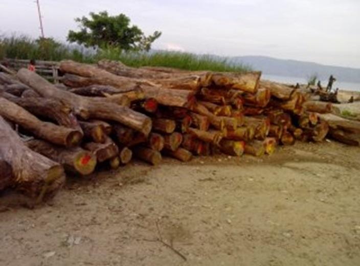 Alerte sur le commerce illégal du bois rouge provenant les paysages des réserves naturelles lwama-kivu, ngandja et itombwe à l'est de la République Démocratique du Congo.